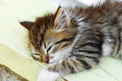 Little kitten sleeping Stock Photos