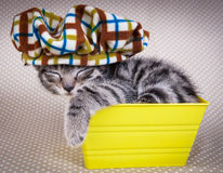 Little kitten sleeping in an yellow box Royalty Free Stock Photography