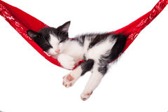 Little kitten sleeps on a hammock. Small cat sleeps sweetly as a small bed. Sleeping cat on a white background. Cats rest after eating Stock Photo