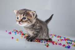 Little kitten with small metal jingle bells beads Royalty Free Stock Photos