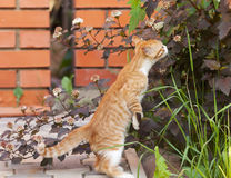 Little kitten sniff Stock Images