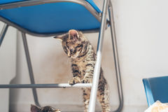 Little kitten standing on a chair Stock Image
