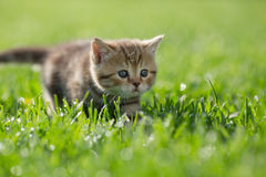 Little kitten steal in green grass Stock Image