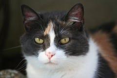 Little kitten Royalty Free Stock Images