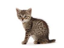 The little kitten Stock Photo