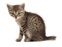 The little kitten Royalty Free Stock Image