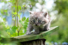 Little kitten in surprise, outdoor shot Royalty Free Stock Image