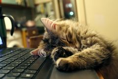 Kitten is sleeping on the laptop royalty free stock images