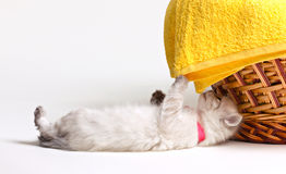 Little kitten and towel Royalty Free Stock Photography