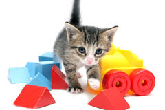 Little kitten with toys Stock Photography