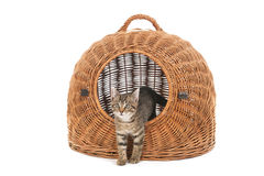 Little kitten in travel basket Royalty Free Stock Photography