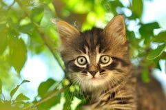 Little kitten Royalty Free Stock Image