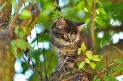 Little kitten Royalty Free Stock Photos