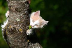 Little kitten in tree Royalty Free Stock Image