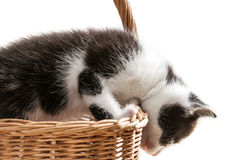 Little kitten is trying to get out of the basket Royalty Free Stock Images