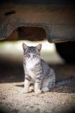 Little kitten. Under a car Stock Photography