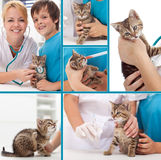 Little kitten at the veterinary collage Stock Images