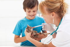 Little kitten at the veterinary getting medication Royalty Free Stock Photos