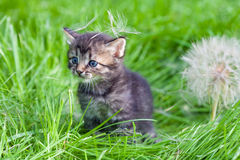 Little kitten walking on the grass Stock Photos