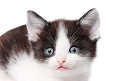 Little kitten watching Royalty Free Stock Images