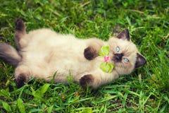 Little kitten wearing bow tie Royalty Free Stock Photo