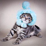 Little kitten wearing  funny hat Royalty Free Stock Images