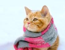 Little kitten wearing knitted scarf stock image