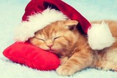 Kitten wearing Santa hat Stock Photo