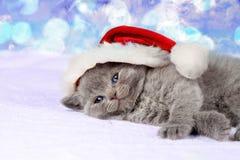 Little kitten wearing santa hat Stock Photo