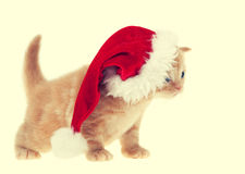 Little kitten wearing santa hat Royalty Free Stock Images