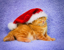 Little kitten wearing Santa's hat Royalty Free Stock Photos