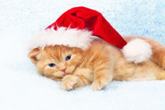 Little kitten wearing Santa's hat Stock Image