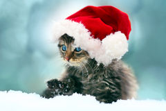 Little kitten wearing Santa's hat Stock Images