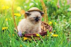 Little kitten wearing straw hat Stock Photo