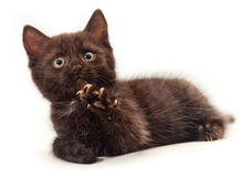 Little kitten on white Stock Photos