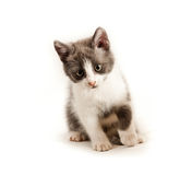 Little kitten on white Royalty Free Stock Image