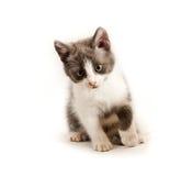 Little kitten on white Royalty Free Stock Image