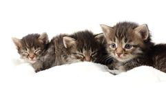 Little kitten on white background Stock Photography