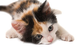 Little kitten Stock Photo