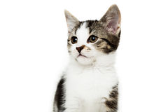Little kitten on white background, Royalty Free Stock Image