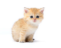 Little kitten on white background Royalty Free Stock Photo