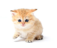 Little kitten on white background Royalty Free Stock Image