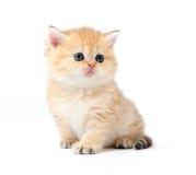 Little kitten on white background Royalty Free Stock Photos