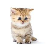 Little kitten on white background Stock Image