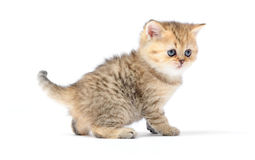 Little kitten on white background Royalty Free Stock Images