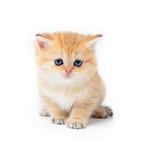 Little kitten on white background Stock Images