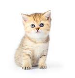 Little kitten on white background Stock Photos