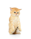 Little kitten on white background Royalty Free Stock Image