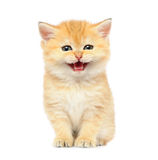 Little kitten on white background Royalty Free Stock Photos