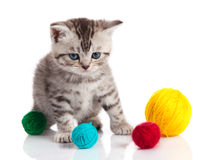Little kitten on white background Royalty Free Stock Images